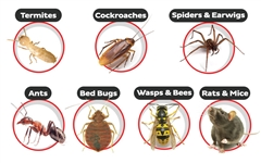 Termite and Pest Control Services in Palampur, Kangra